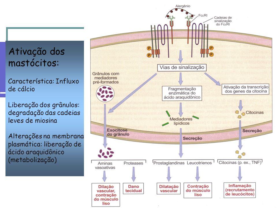 Ativação dos mastócitos: Característica: Influxo de cálcio Liberação dos grânulos: degradação das cadeias leves de miosina Alterações na membrana plasmática: liberação de ácido araquidônico (metabolização)