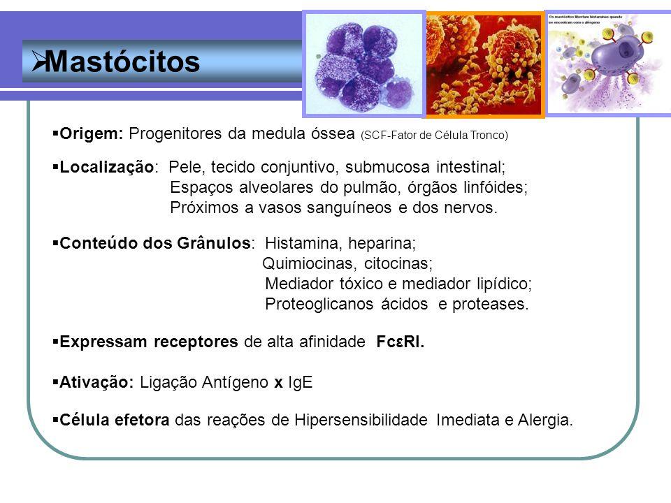 Mastócitos Origem: Progenitores da medula óssea (SCF-Fator de Célula Tronco) Localização: Pele, tecido conjuntivo, submucosa intestinal;
