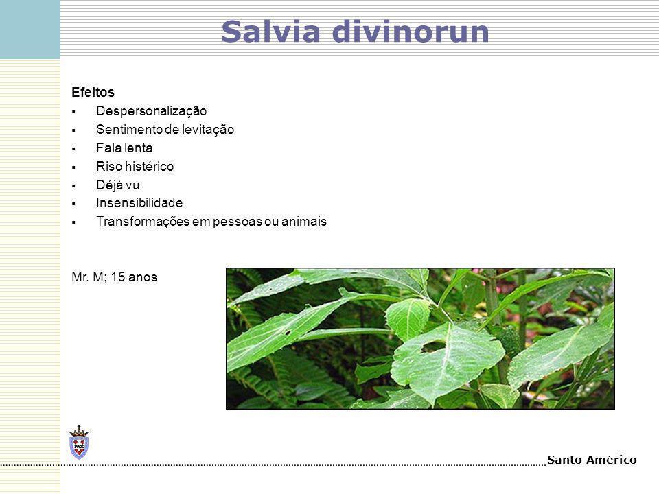 Salvia divinorun Efeitos Despersonalização Sentimento de levitação
