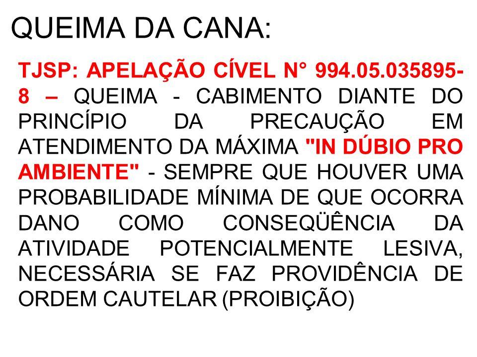 QUEIMA DA CANA: