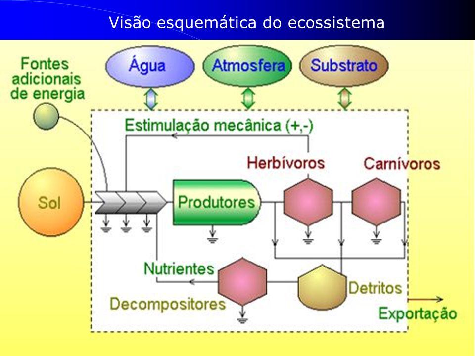 Visão esquemática do ecossistema
