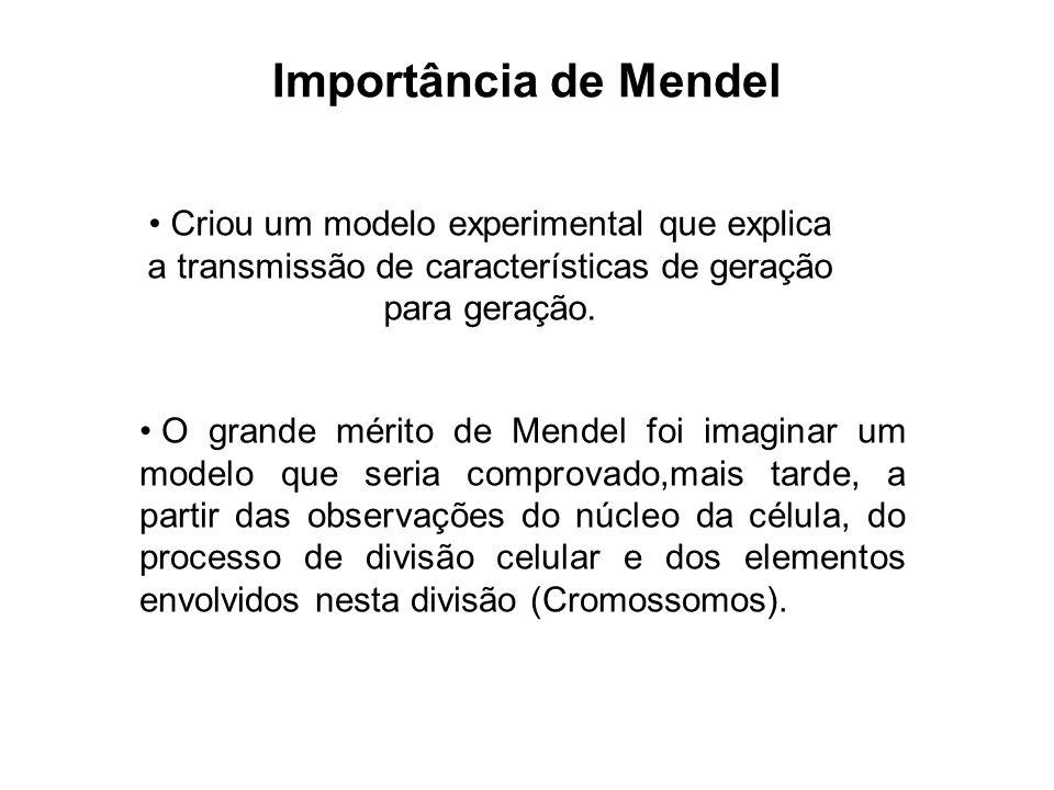 Importância de Mendel Criou um modelo experimental que explica a transmissão de características de geração para geração.