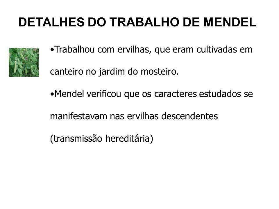 DETALHES DO TRABALHO DE MENDEL