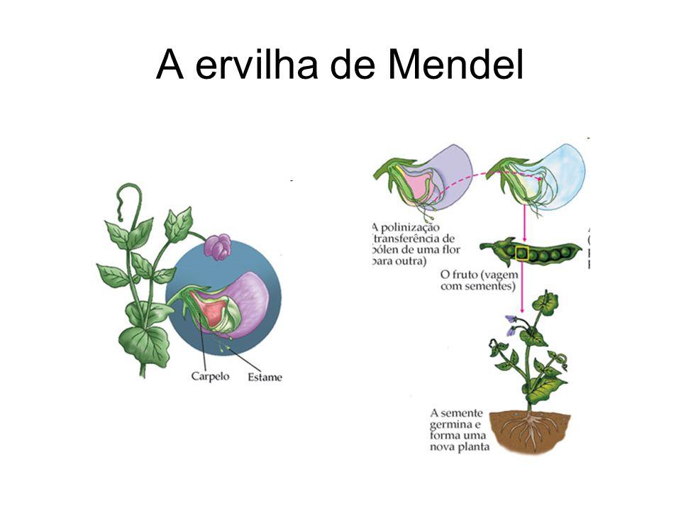A ervilha de Mendel