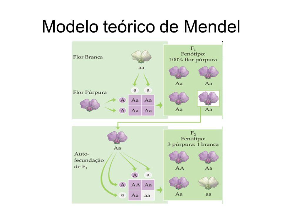 Modelo teórico de Mendel