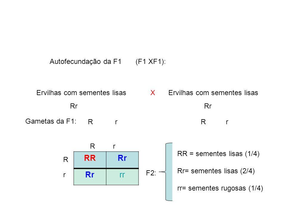 RR Rr rr Autofecundação da F1 (F1 XF1): Ervilhas com sementes lisas X