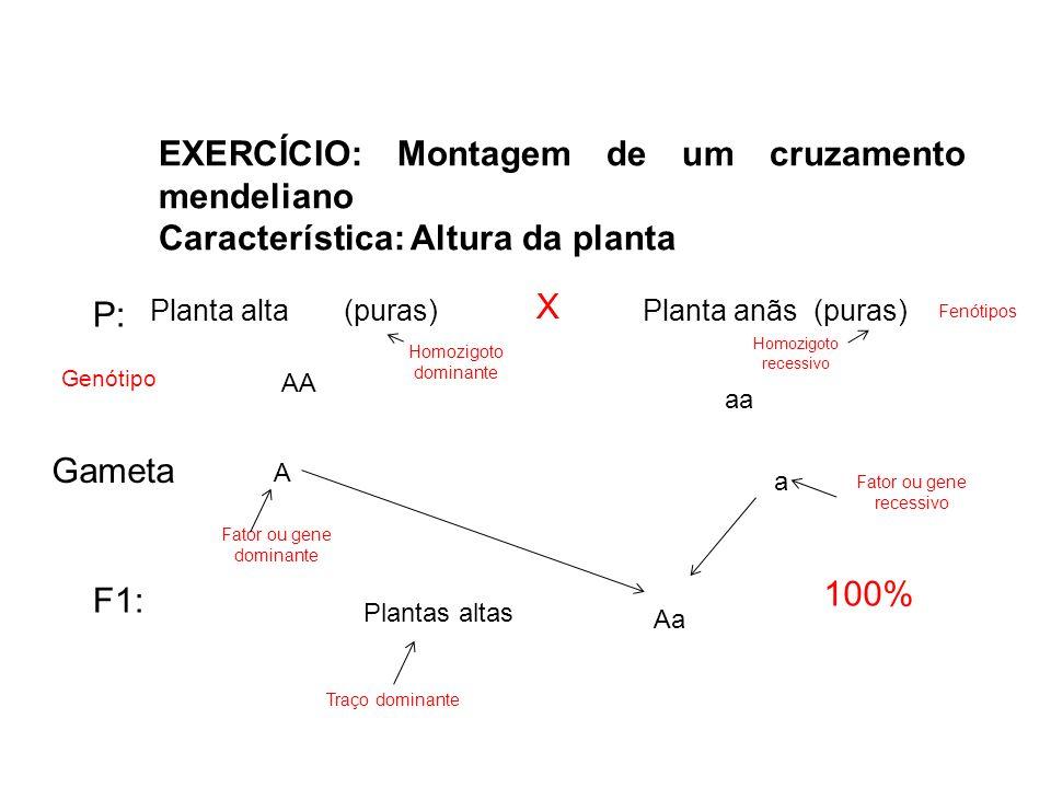 EXERCÍCIO: Montagem de um cruzamento mendeliano