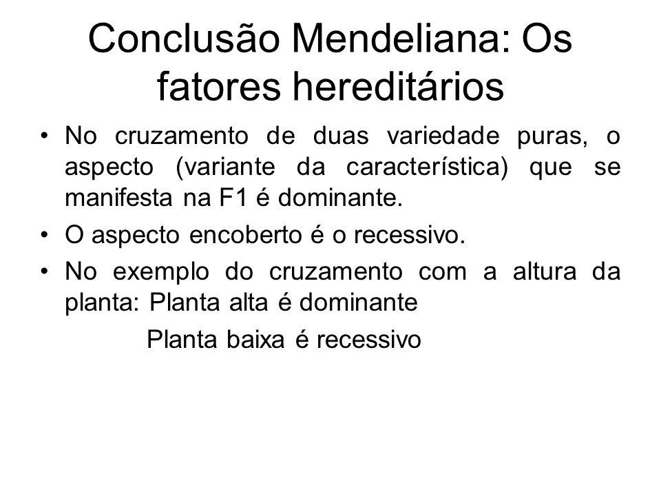 Conclusão Mendeliana: Os fatores hereditários
