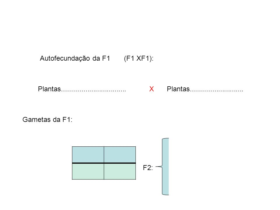 Autofecundação da F1 (F1 XF1):