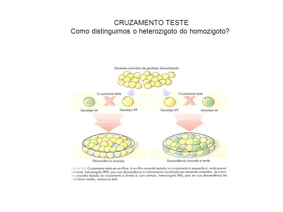 Como distinguimos o heterozigoto do homozigoto