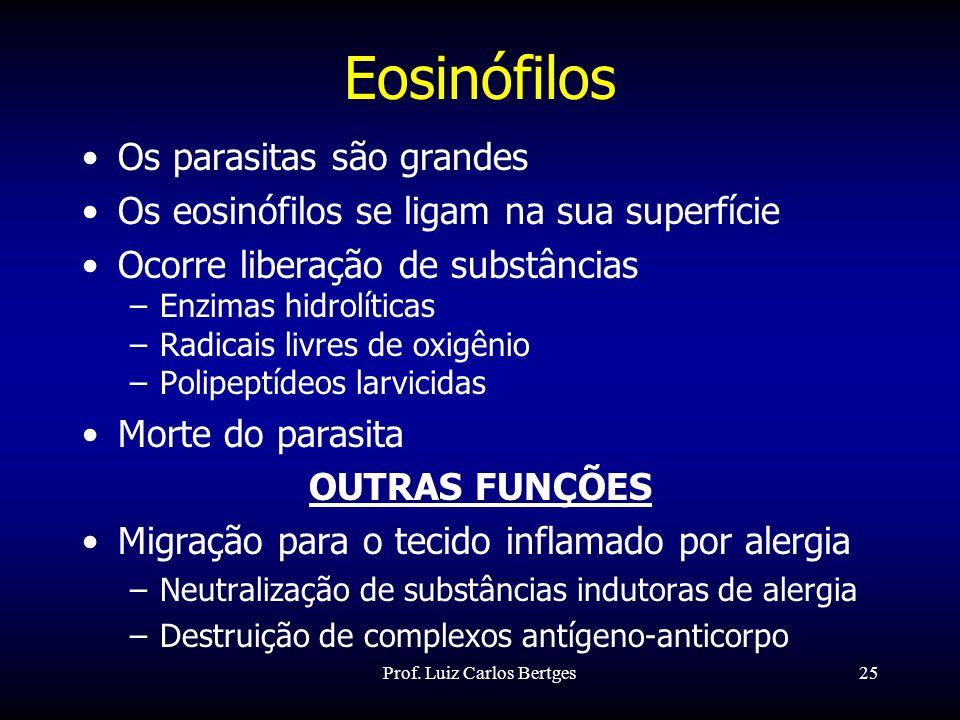 Prof. Luiz Carlos Bertges