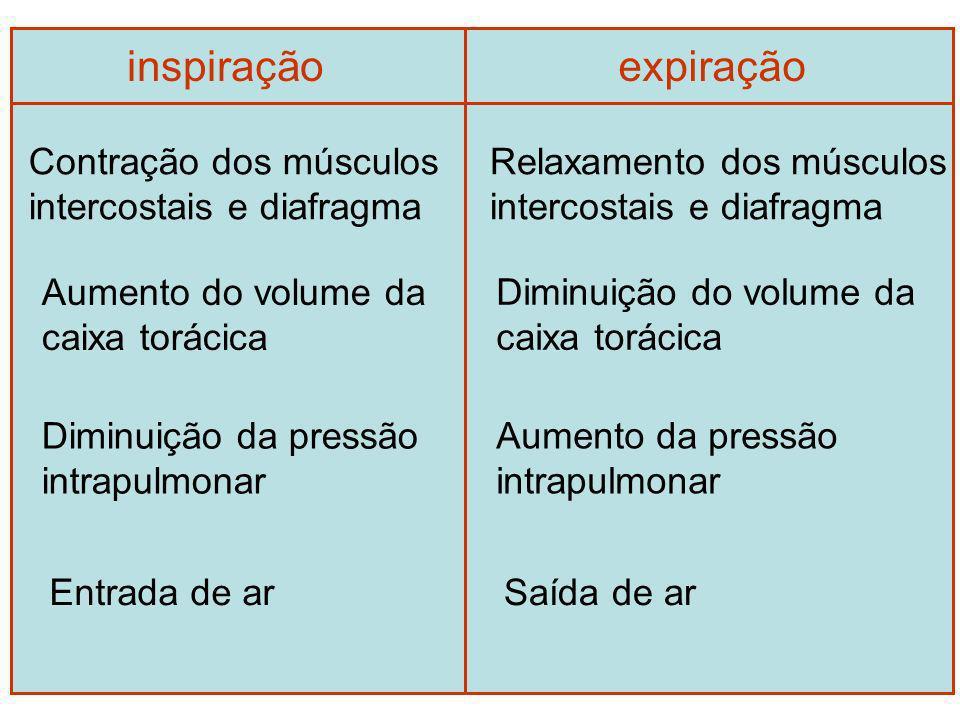 inspiração expiração Contração dos músculos intercostais e diafragma