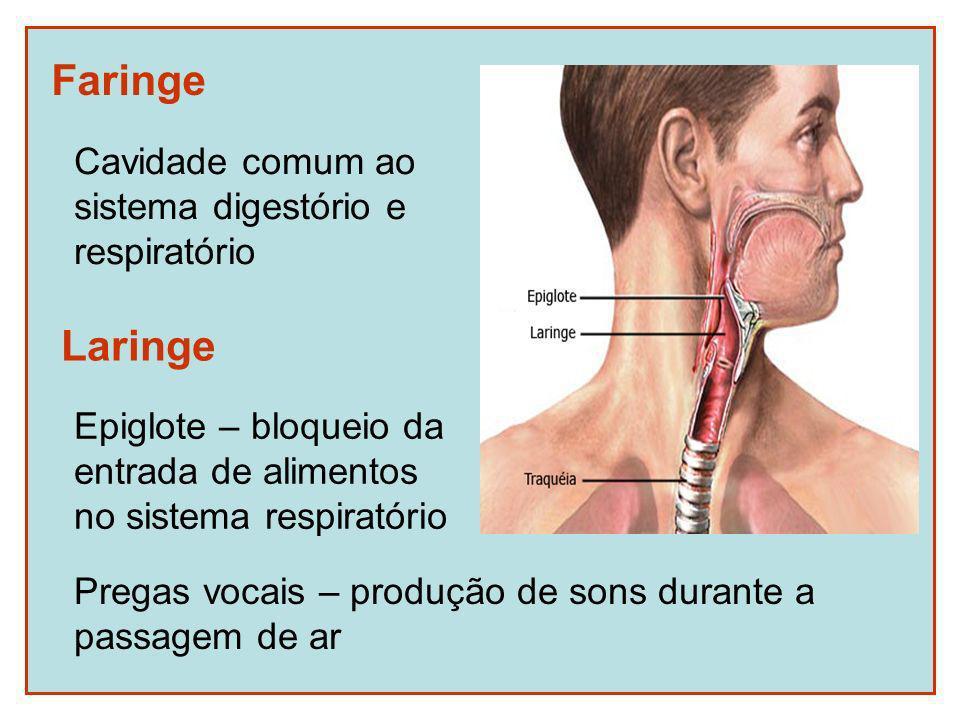 Faringe Laringe Cavidade comum ao sistema digestório e respiratório