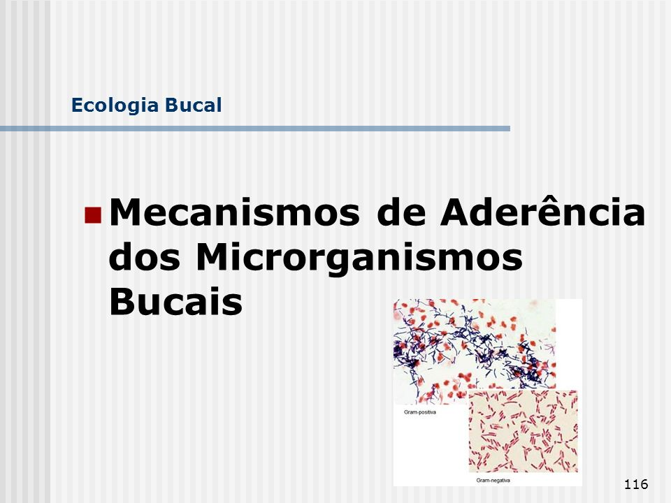Mecanismos de Aderência dos Microrganismos Bucais