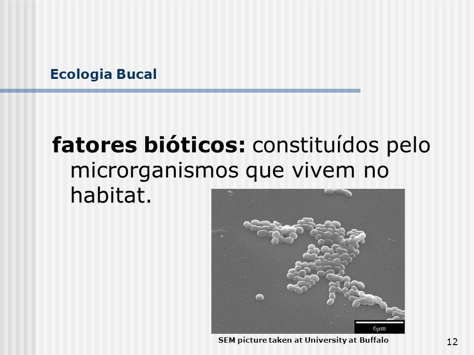 Ecologia Bucal fatores bióticos: constituídos pelo microrganismos que vivem no habitat.
