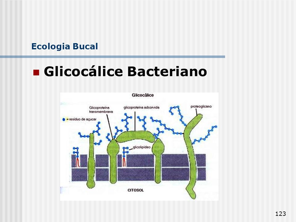 Glicocálice Bacteriano