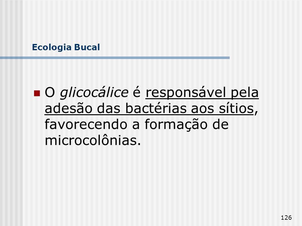 Ecologia Bucal O glicocálice é responsável pela adesão das bactérias aos sítios, favorecendo a formação de microcolônias.