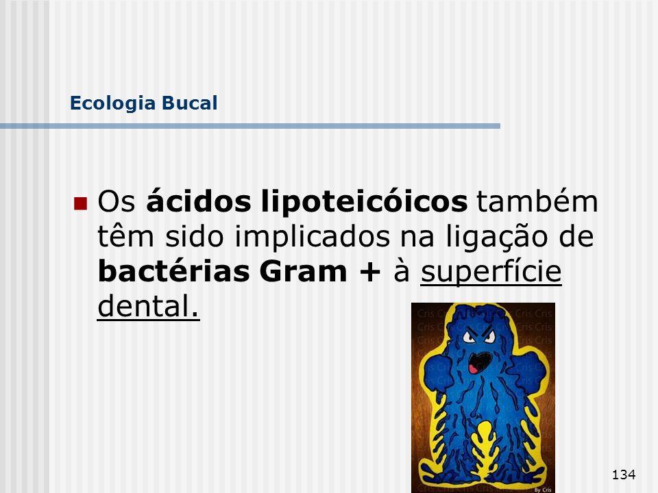 Ecologia Bucal Os ácidos lipoteicóicos também têm sido implicados na ligação de bactérias Gram + à superfície dental.