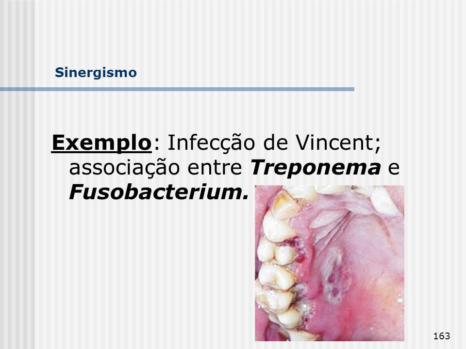 Sinergismo Exemplo: Infecção de Vincent; associação entre Treponema e Fusobacterium.