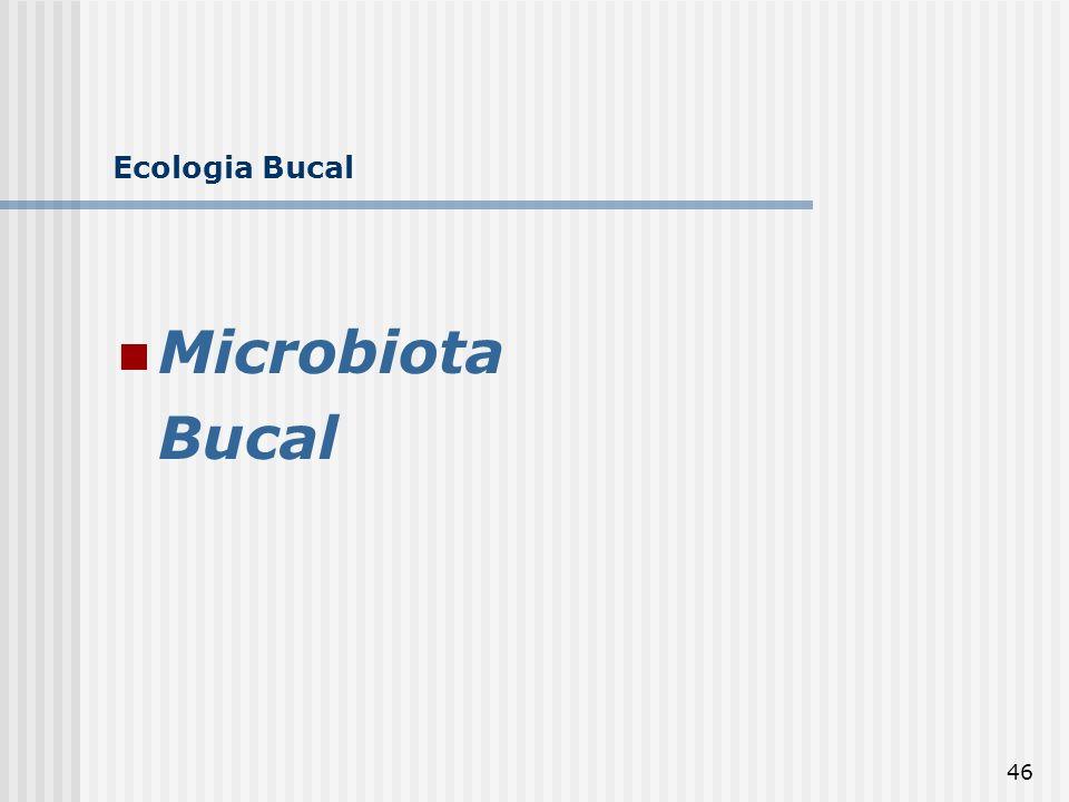 Ecologia Bucal Microbiota Bucal
