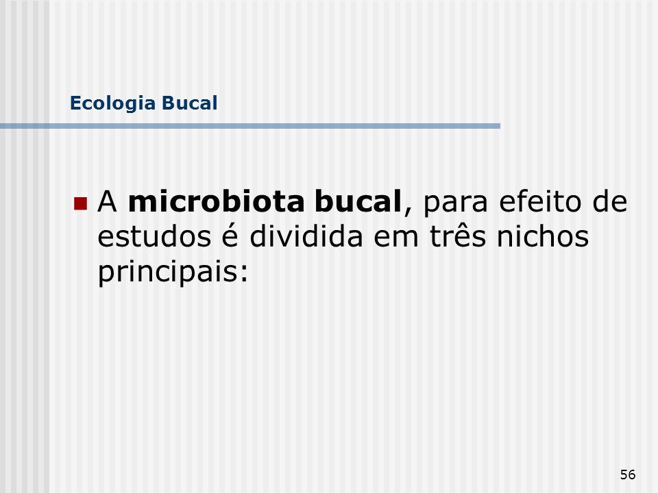 Ecologia Bucal A microbiota bucal, para efeito de estudos é dividida em três nichos principais: