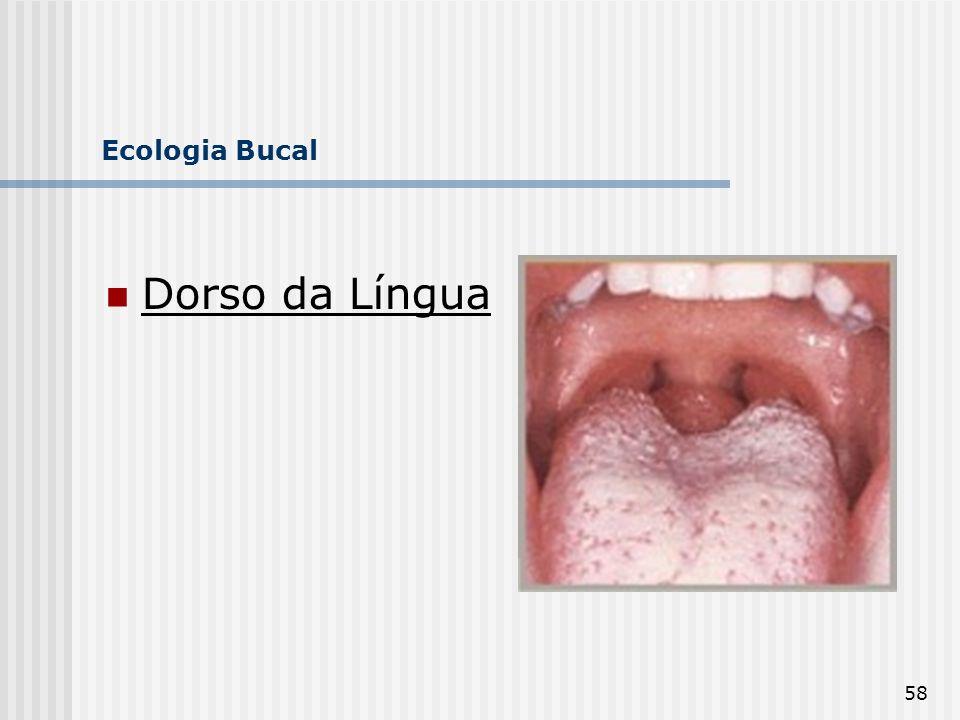 Ecologia Bucal Dorso da Língua