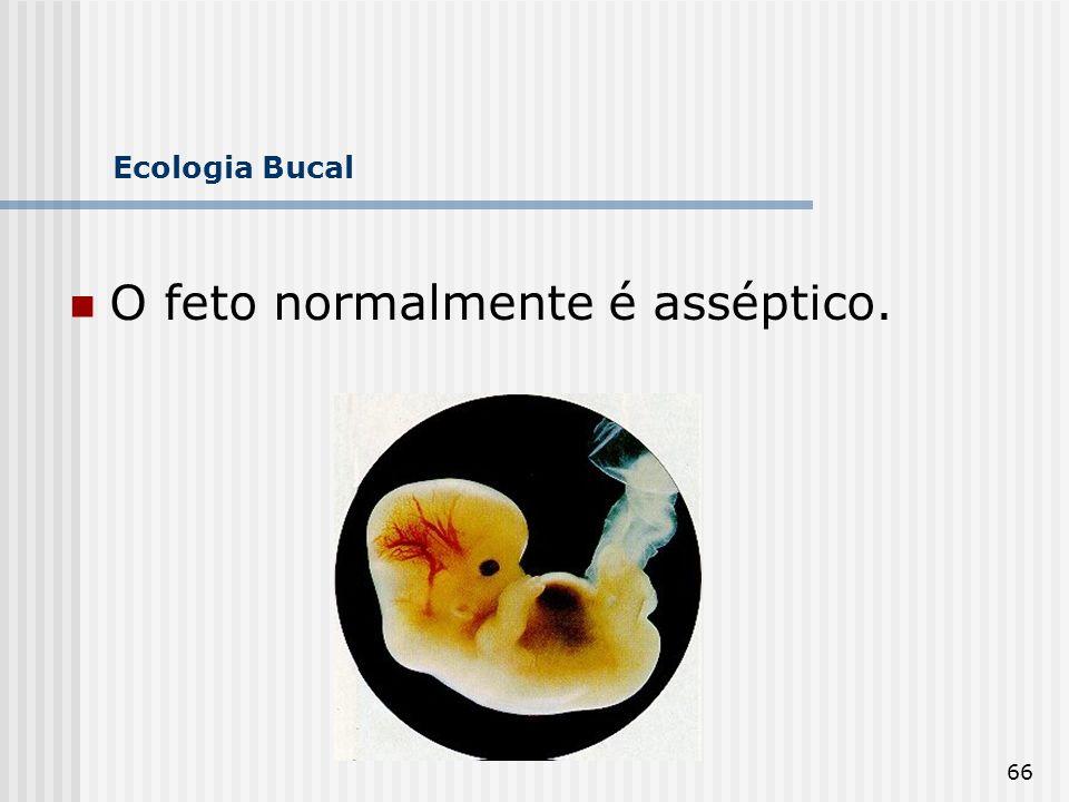 O feto normalmente é asséptico.