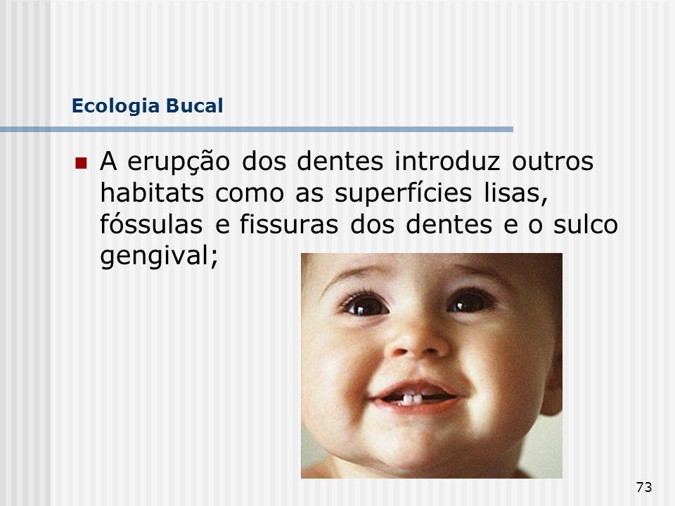 Ecologia Bucal A erupção dos dentes introduz outros habitats como as superfícies lisas, fóssulas e fissuras dos dentes e o sulco gengival;