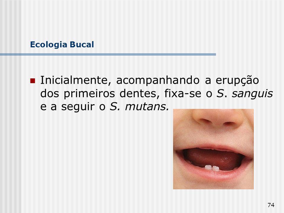 Ecologia Bucal Inicialmente, acompanhando a erupção dos primeiros dentes, fixa-se o S.