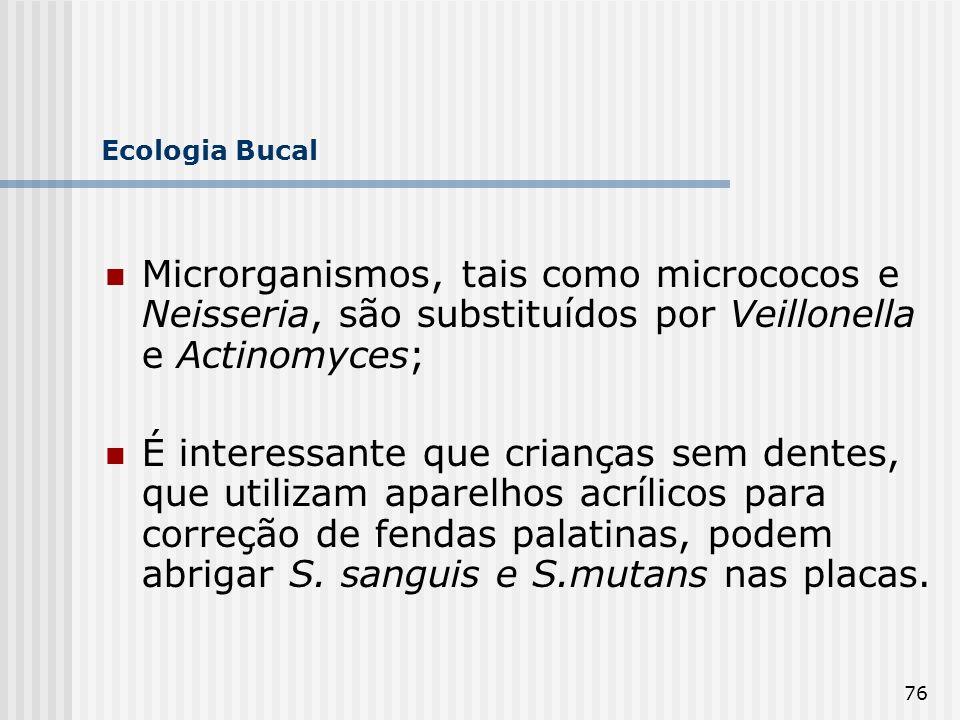 Ecologia Bucal Microrganismos, tais como micrococos e Neisseria, são substituídos por Veillonella e Actinomyces;