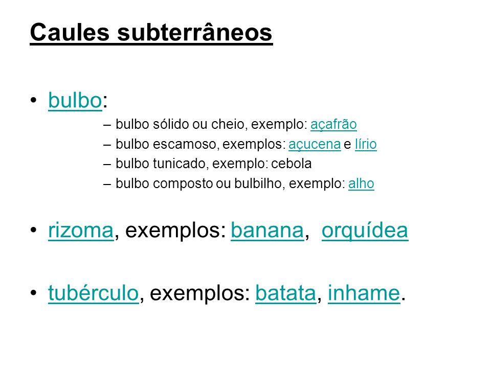 Caules subterrâneos bulbo: rizoma, exemplos: banana, orquídea
