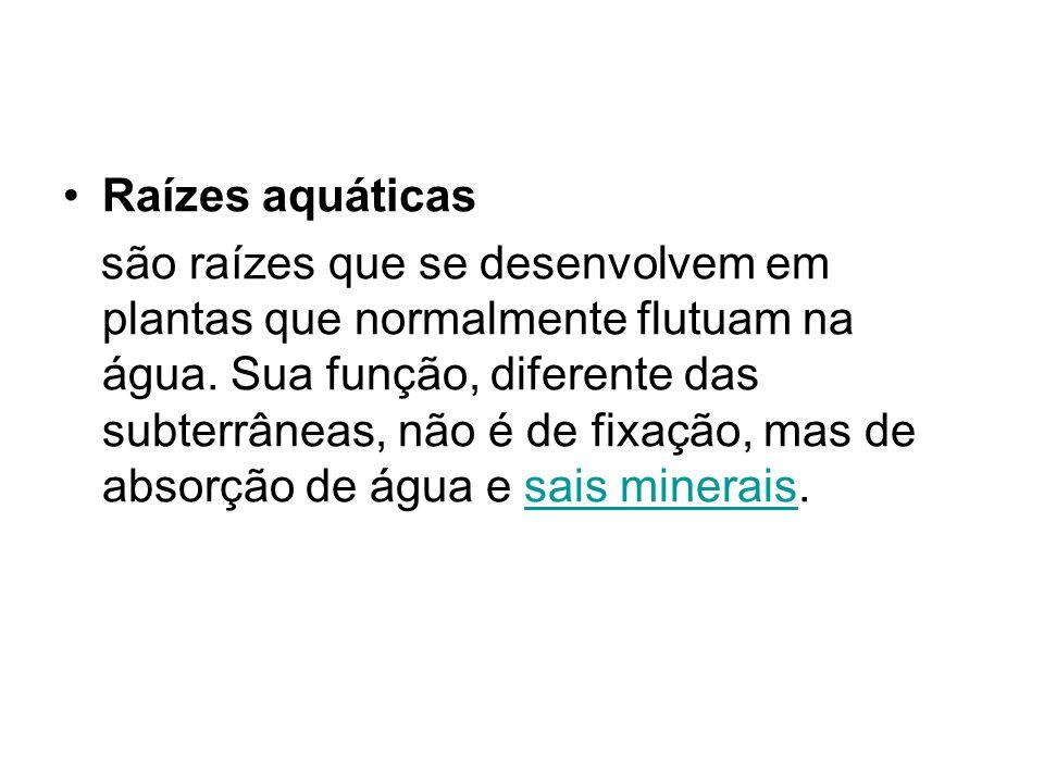 Raízes aquáticas