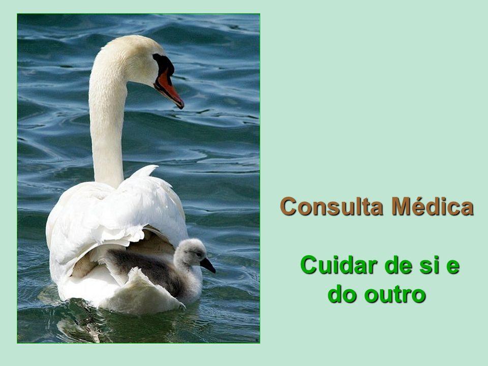 Consulta Médica Cuidar de si e do outro