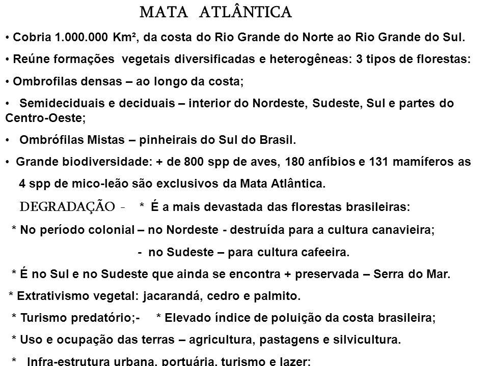 MATA ATLÂNTICA Cobria 1.000.000 Km², da costa do Rio Grande do Norte ao Rio Grande do Sul.