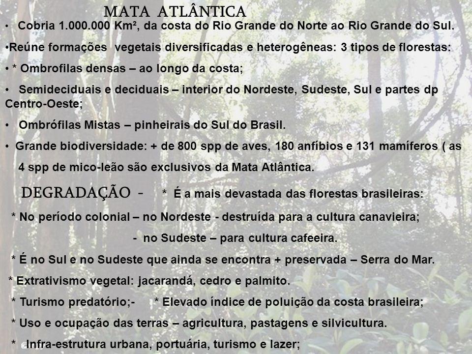 DEGRADAÇÃO - * É a mais devastada das florestas brasileiras: