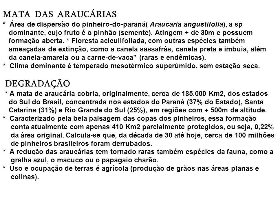 MATA DAS ARAUCÁRIAS * Área de dispersão do pinheiro-do-paraná( Araucaria angustifolia), a sp dominante, cujo fruto é o pinhão (semente).
