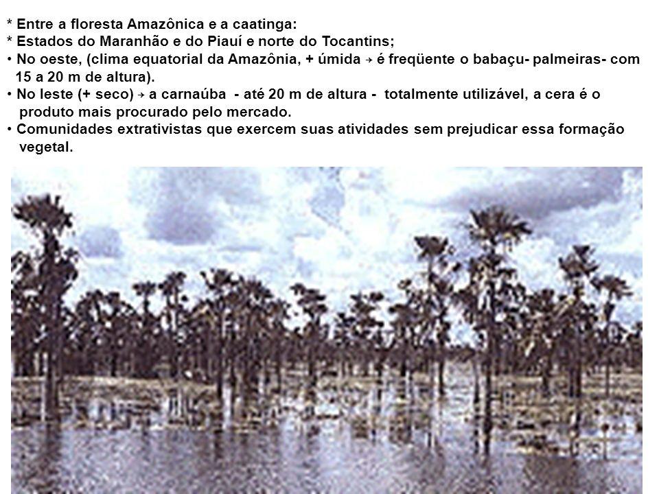 * Entre a floresta Amazônica e a caatinga: