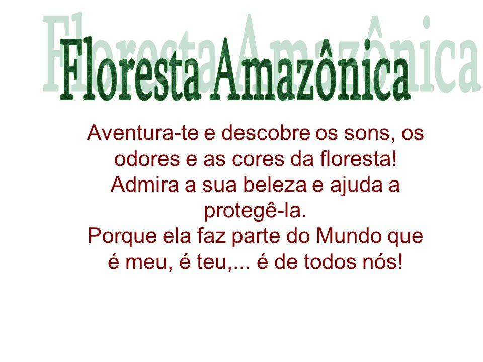 Aventura-te e descobre os sons, os odores e as cores da floresta!