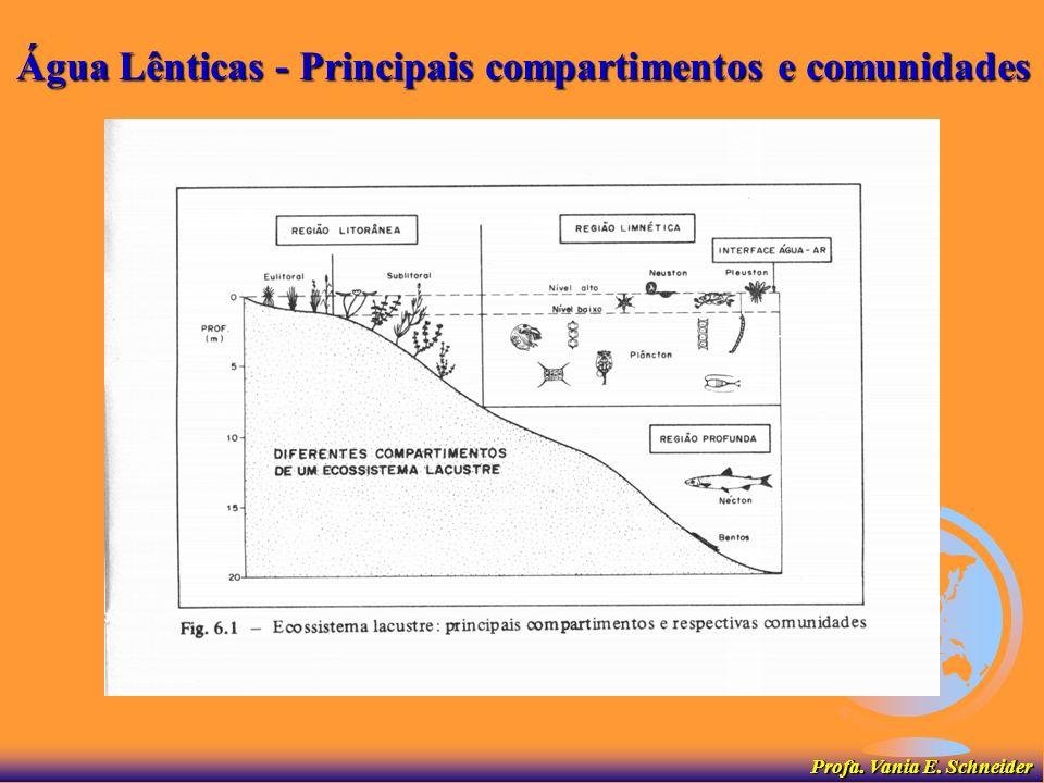 Água Lênticas - Principais compartimentos e comunidades