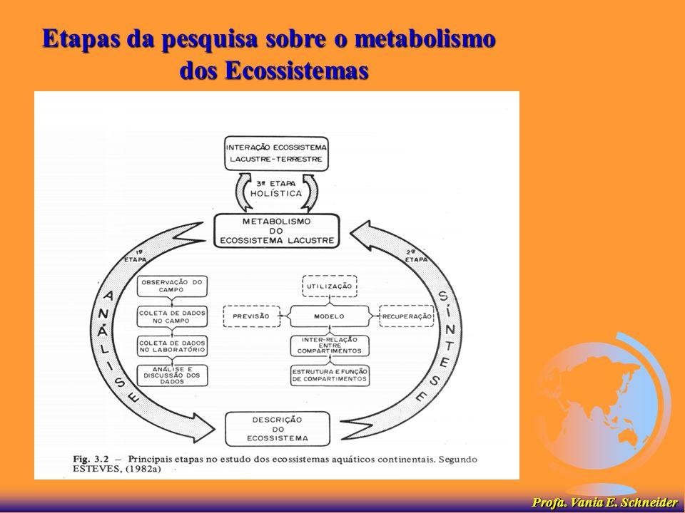 Etapas da pesquisa sobre o metabolismo