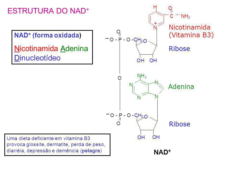 Nicotinamida Adenina Dinucleotídeo
