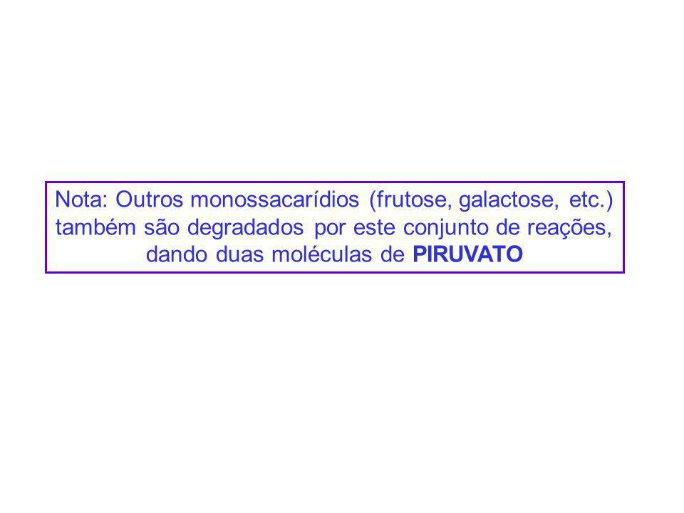 Nota: Outros monossacarídios (frutose, galactose, etc