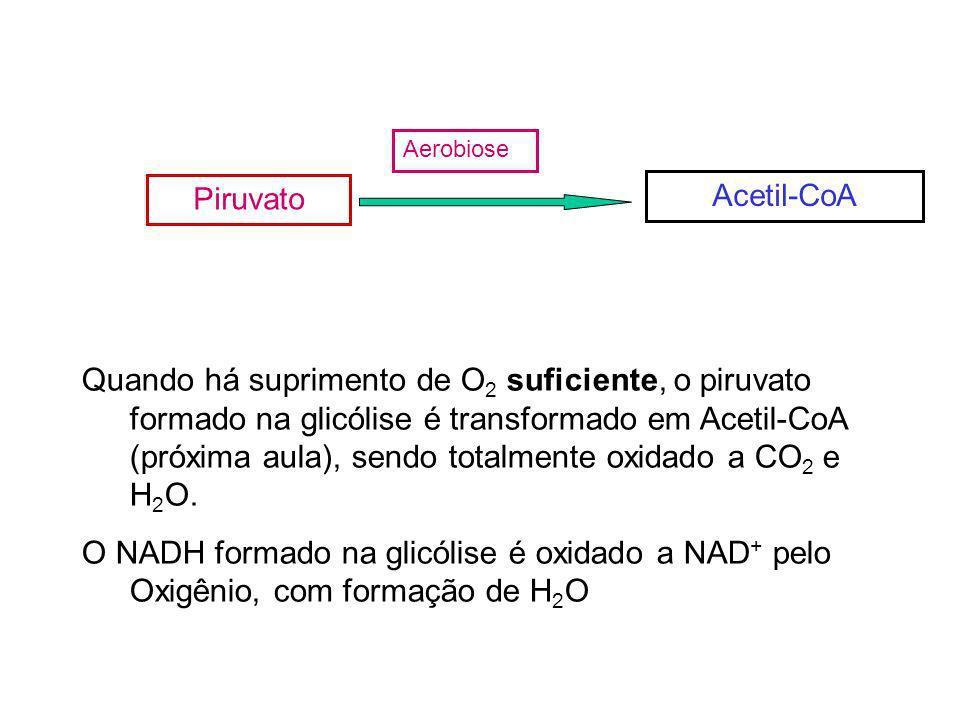 Aerobiose Piruvato. Acetil-CoA.