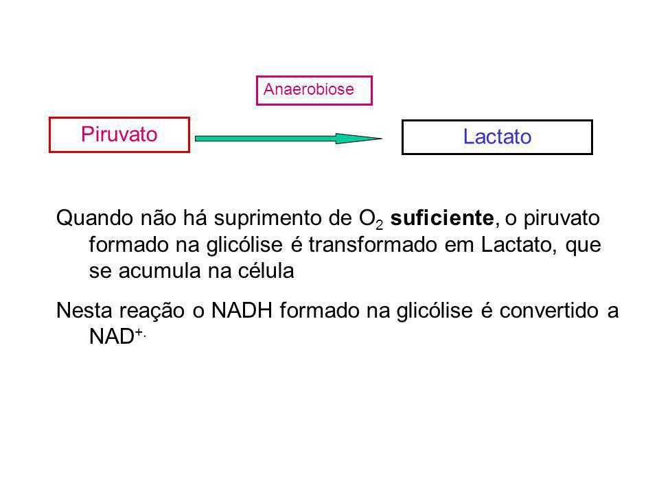 Nesta reação o NADH formado na glicólise é convertido a NAD+.