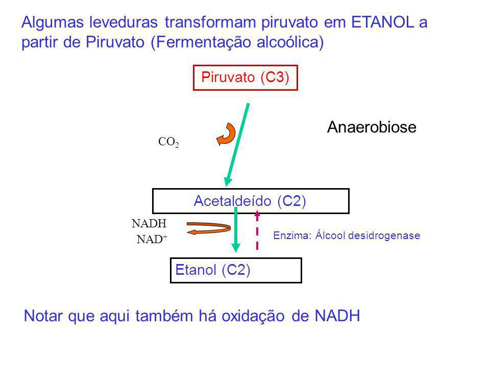 Notar que aqui também há oxidação de NADH