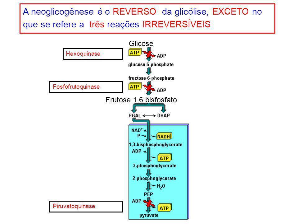 A neoglicogênese é o REVERSO da glicólise, EXCETO no que se refere a três reações IRREVERSÍVEIS
