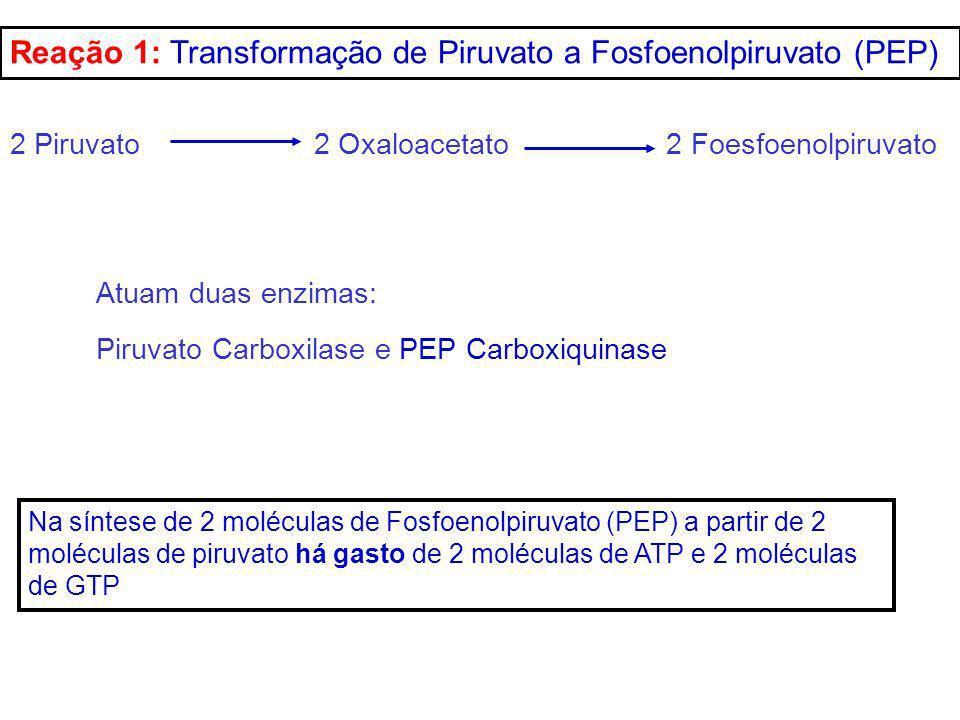 Reação 1: Transformação de Piruvato a Fosfoenolpiruvato (PEP)