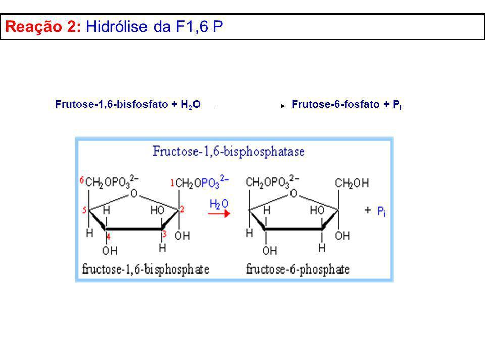 Reação 2: Hidrólise da F1,6 P