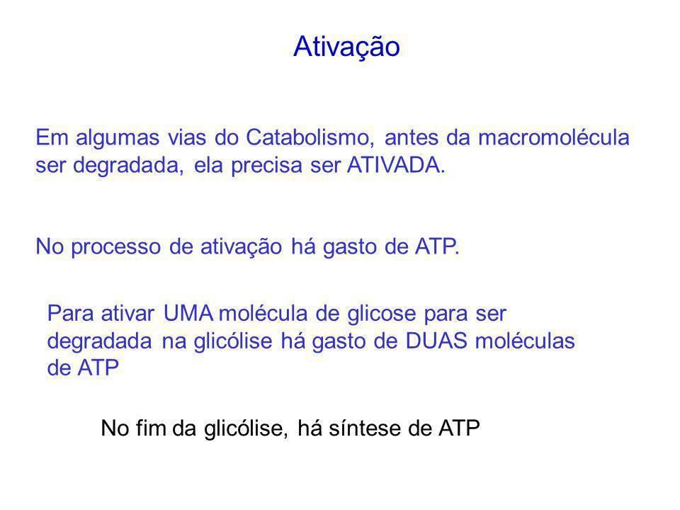 Ativação Em algumas vias do Catabolismo, antes da macromolécula ser degradada, ela precisa ser ATIVADA.