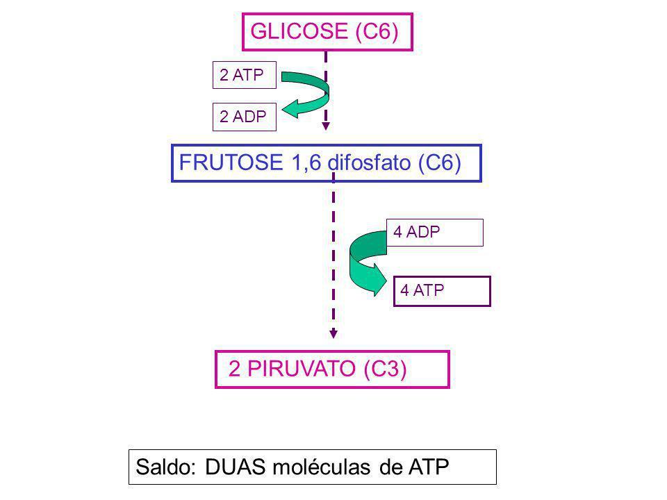 Saldo: DUAS moléculas de ATP